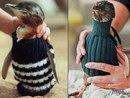 109-летний Альфи Дейт из Австралии вяжет крошечные свитера для поранившихся от разлива неф…