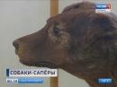В парке Сосновка откроют памятник военным дрессировщикам и собакам Ленинградск...