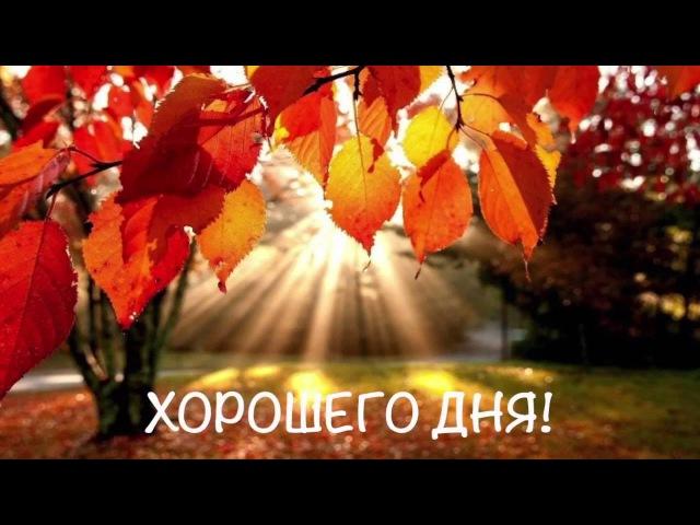 Видеопожелание/видео открытка с добрым утром. Красивое пожелание доброго утра №1
