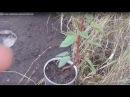 Посадка плодовых саженцев на холм по Железову - весной и осенью