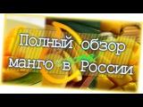 Как выбрать спелое манго Обзор всех манго в России
