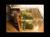 Самодельный мини фильтр для аквариума  Mini External Aquarium Filter