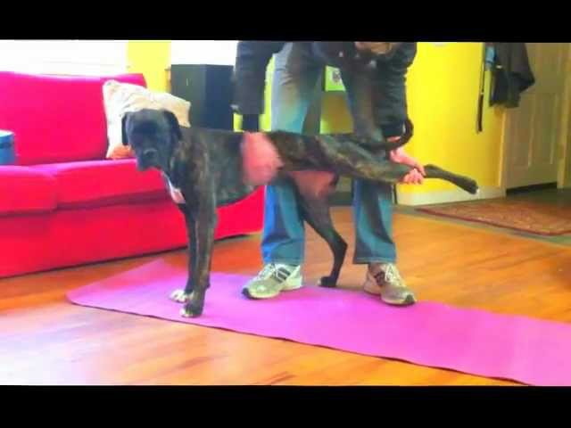 Dog Stretching and Warmup Routine