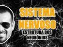 Sistema Nervoso - Estrutura dos neurônios e sinapse - Anatomia Humana - VídeoAula 008