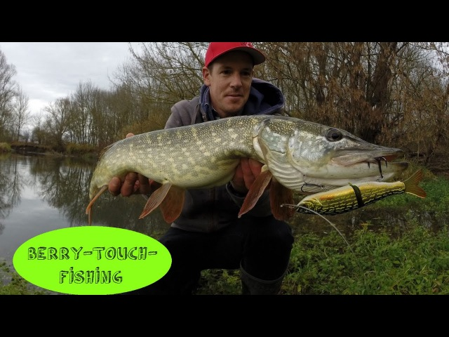 Brochets d'automne au swimbait S Waver