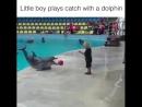Мальчик играет с дельфином.