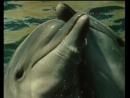 Люди и дельфины (1983. Серия 1).