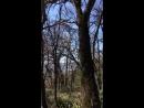 Прогулка в Массандровский парк🚶🏻♀️🌸