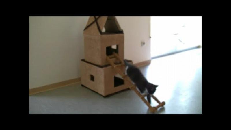Домик для Кошки из картона домик для кошки своими руками