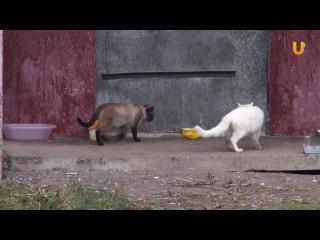 UTV.  В Башкирии решают как защитить бездомных животных