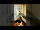 Попугай корелла разговаривает с человеком на ровне.