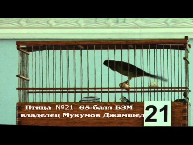 K №21 Таджикский конкурс певчих канареек Овся. нап.