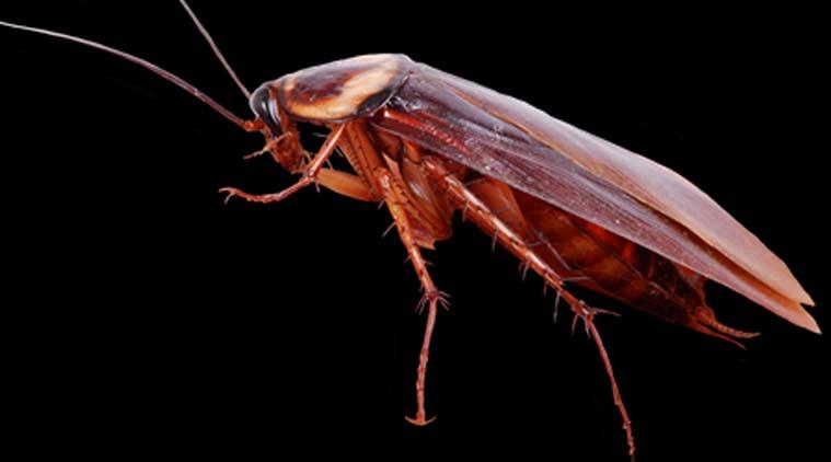 У женщины достали из головы таракана (ВИДЕО)