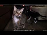 Кормим кота Борю, голодавшего в детстве. Прямая трансляция