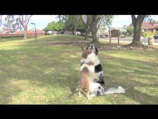 Удивительные собачьи трюки