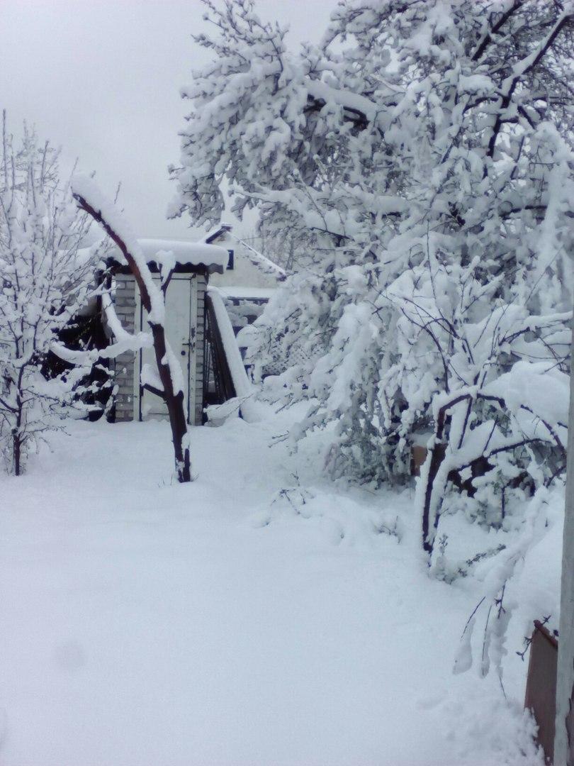 """""""На часах 7 часов. Минус 2. Во дворе 8 сантиметров снега. Деревья жалко - только расцветать начали"""", - аномальный снегопад в Днепре - Цензор.НЕТ 9415"""