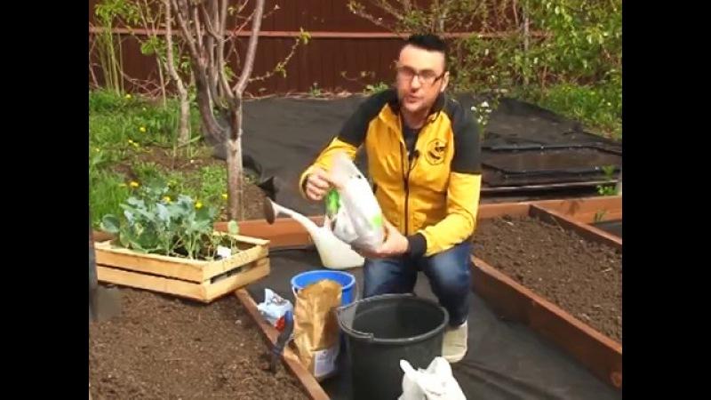 Как сажать капусту и чем кормить растения Виталий Декабрев №58