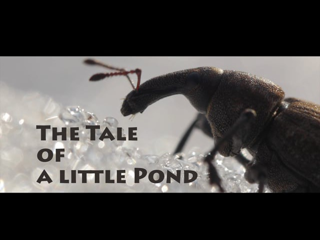 The Tale of a little Pond