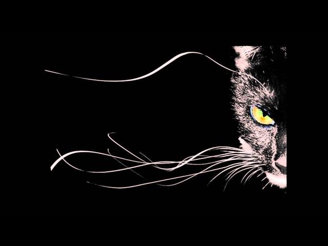 Магия кошки в доме