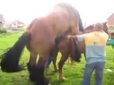 Спаривание коня и лошади  18 ( эротика порно )
