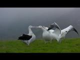 Птицы Le peuple migrateur (2001)