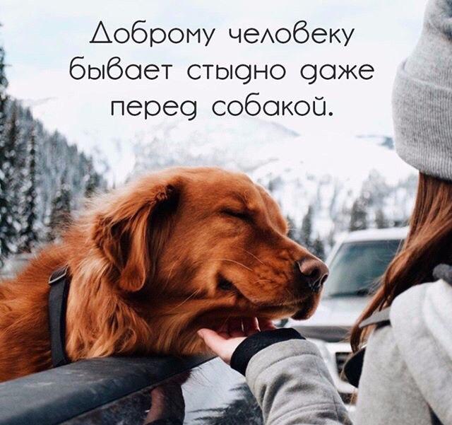 https://cs541603.userapi.com/c637827/v637827379/3c656/qHkBx2w-bGo.jpg