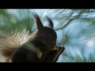 BBC Жизнь млекопитающих 04_Chisellers