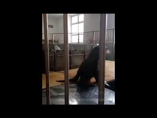 Морские котики в Ростовском цирке (25.02.17) Это Ростов-на-Дону