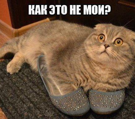 Рашид Наджафов, Екатеринбург - фото №1
