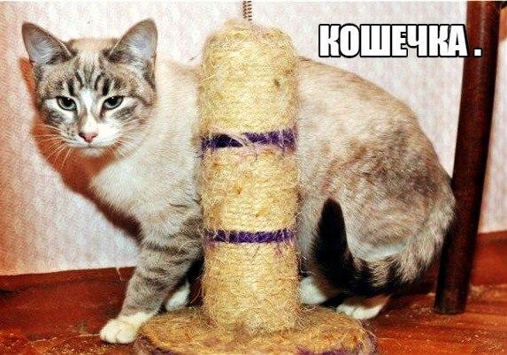 А МЫ ИЩЕМ ДОМ И СЕМЬЮ !!!    2 котика-кастраты и 1 кошечка-стерилизова