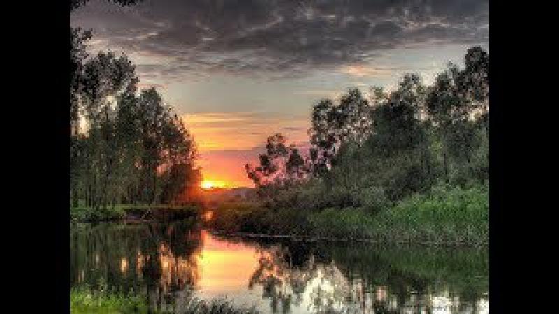 Пение сверчка, журчание воды, цикады и звуки лесных птиц на закате. Антистресс, дарит вдохновение