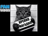 коты приколы с котами смешные коты видео про животных funny cats собаки кот смешные к...