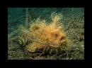 Самое странное место в океане. Невидимые хищники и другие существа. Фильм Nat Geo Wild 17.11.2016
