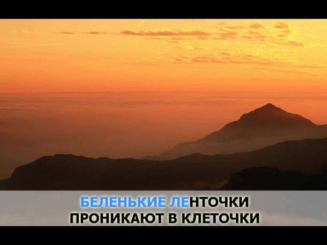 «Одиночество любви», Винтаж: караоке и текст песни
