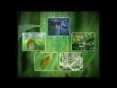 Бурая ржавчина и другие ржавчины зерновых культур