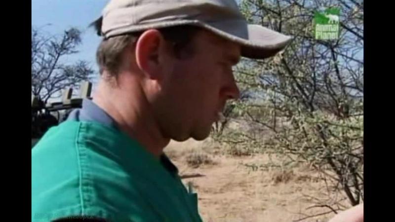 BBC «Заповедник в дебрях Африки» (25 серия) (Реальное ТВ, животные, 2006)
