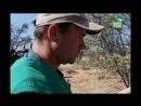 BBC Заповедник в дебрях Африки 25 серия Реальное ТВ животные 2006
