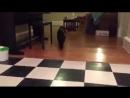 С кошкой можно играть даже резинкой