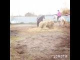 __asya_isaykina__ video