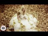 Наталья Пугачева - Без тебя (Full HD)
