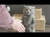 Best Friends Handshake - Aaron's Animals