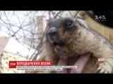 Льввський бабак зробив свй прогноз щодо приходу весни