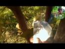 5. Видеоуроки В. Железова №4. Колоновидные яблони