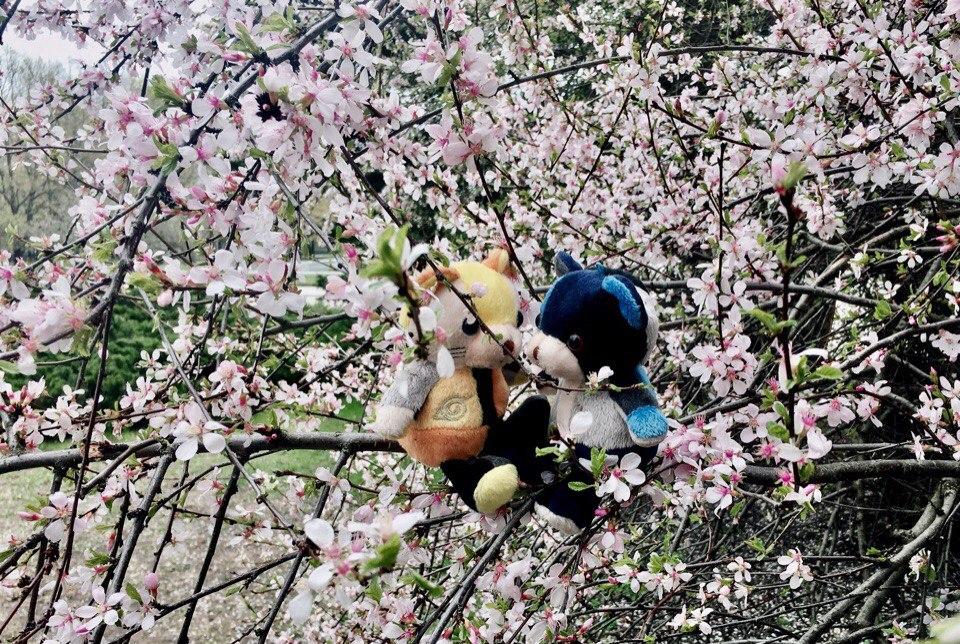 Картинка грустная весна