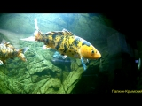 Тест Экшн камеры X-TRY XTC 220Севастопольский аквариум