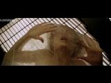 Обнажённая Сигурни Уивер Sigourney Weaver в фильме Чужой 4 Воскрешение Alien Resurrection, Жан-Пьер Жёне, 1997 1080p