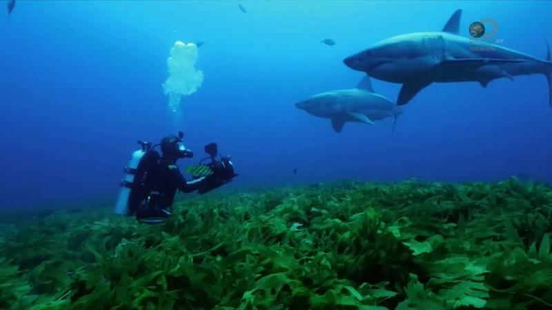 Неделя акул 5 серия. Остров челюстей / Shark Week (2017)