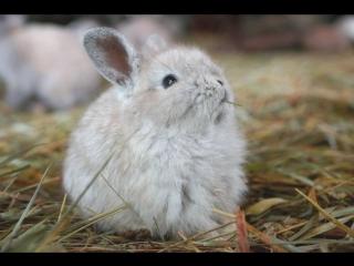 В Челябинске спасли новорожденного зайчонка. Сорока клевала его прямо в голову, малышу чудом удалось выжить