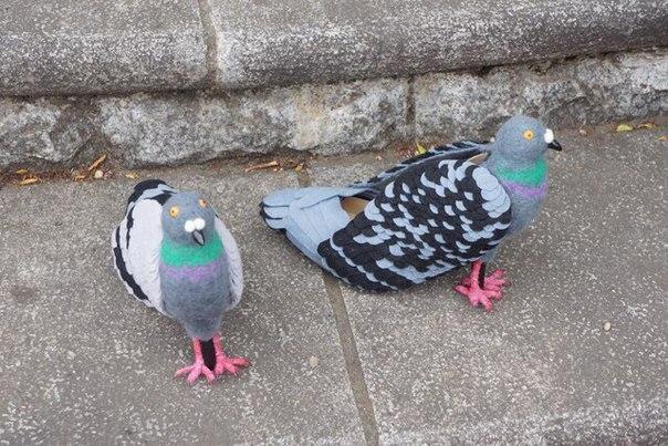 Сделал бизнес на голубях