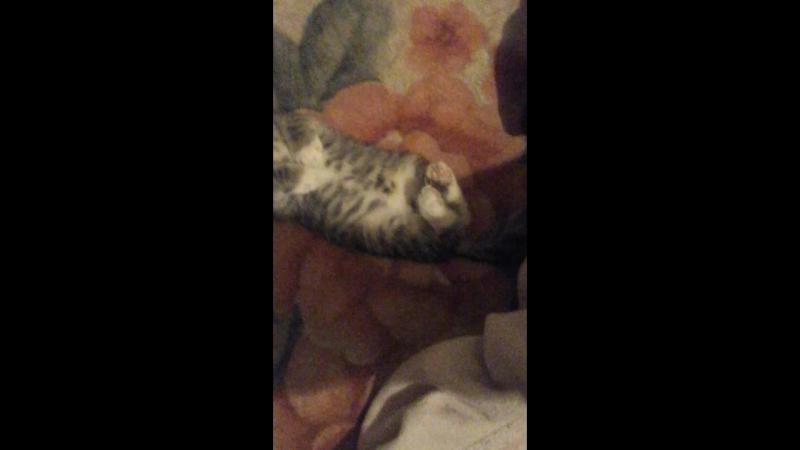 Как мой кот спит
